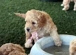 playing in the water dish