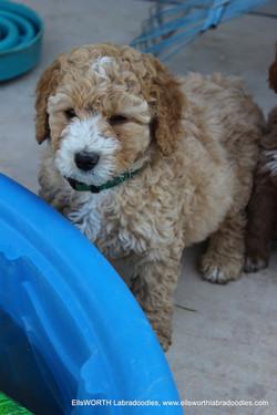 curly boy sweetheart