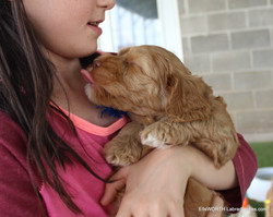 giving puppy kisses