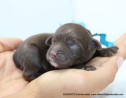 6th puppy born at 8:32 AM