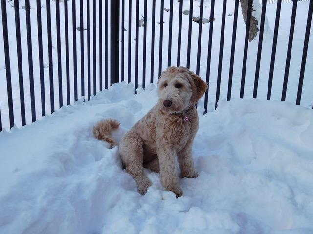 Greta in the snow