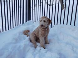 Greta in the snow