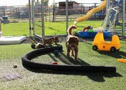 coming into the kennel puppy area