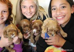 cutie-pie puppies and girls