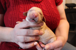 3 days old weighs 1.10 lbs