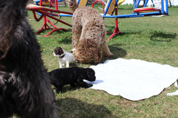 Jack checking out the puppies