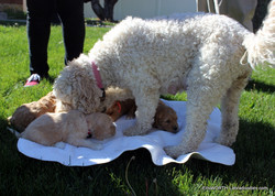 Lilly and her puppies outside