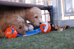 the pups sleep on and play under