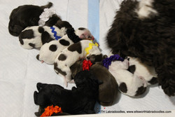 This is a lot of puppies
