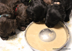 """first time trying Puppy """"mush"""""""
