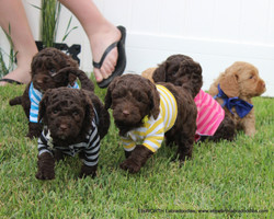 Puppies in shirts! the cutest  :)