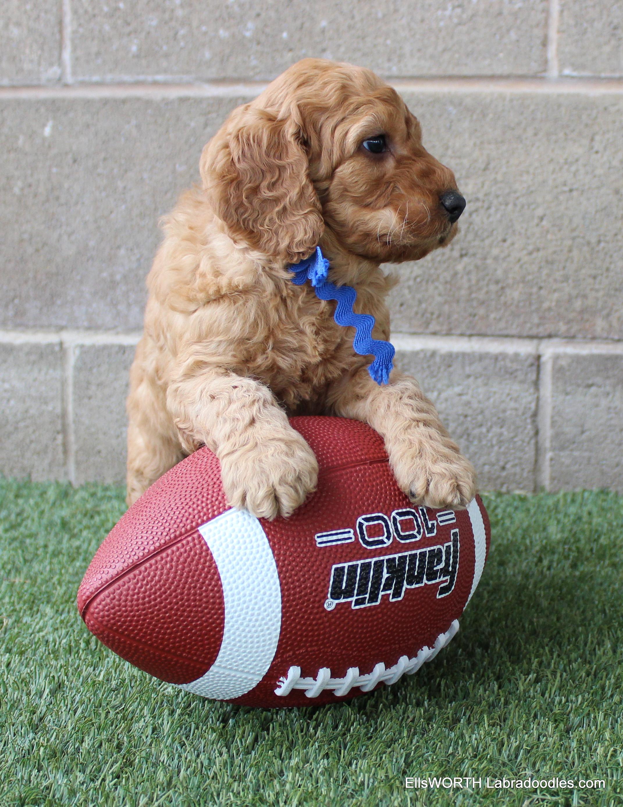 he liked the football