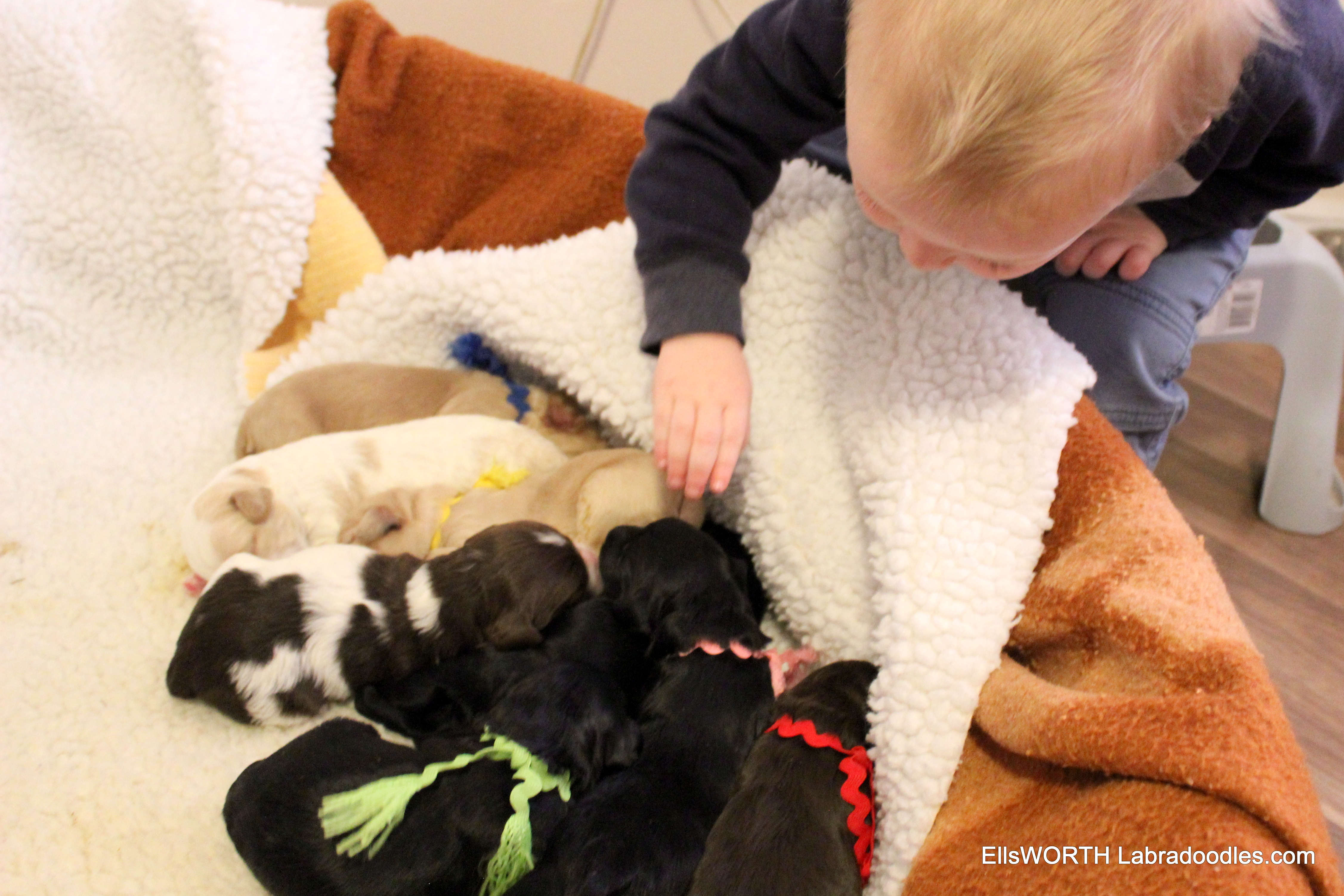My Grandson  came to see the puppies