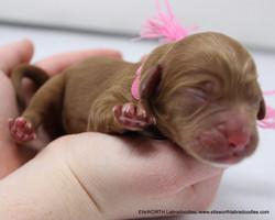 4th born, 1st girl at 10:12 PM