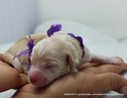 1st born at 5.00 AM