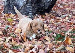 fun in the leafs