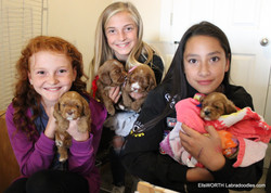 the girls and the puppies