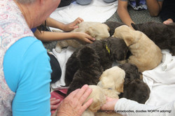 We took the puppies to a 2nd grade class