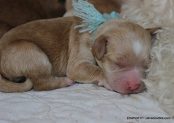 5th puppy born at 6:03PM