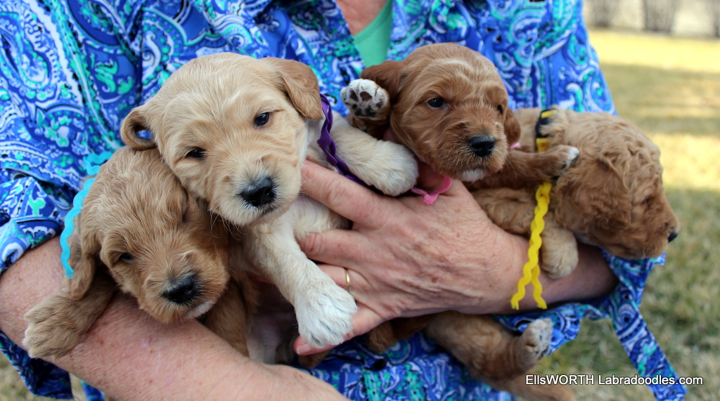 it is hard to hold 4  puppies