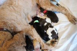 last puppy was born at 9:31 AM