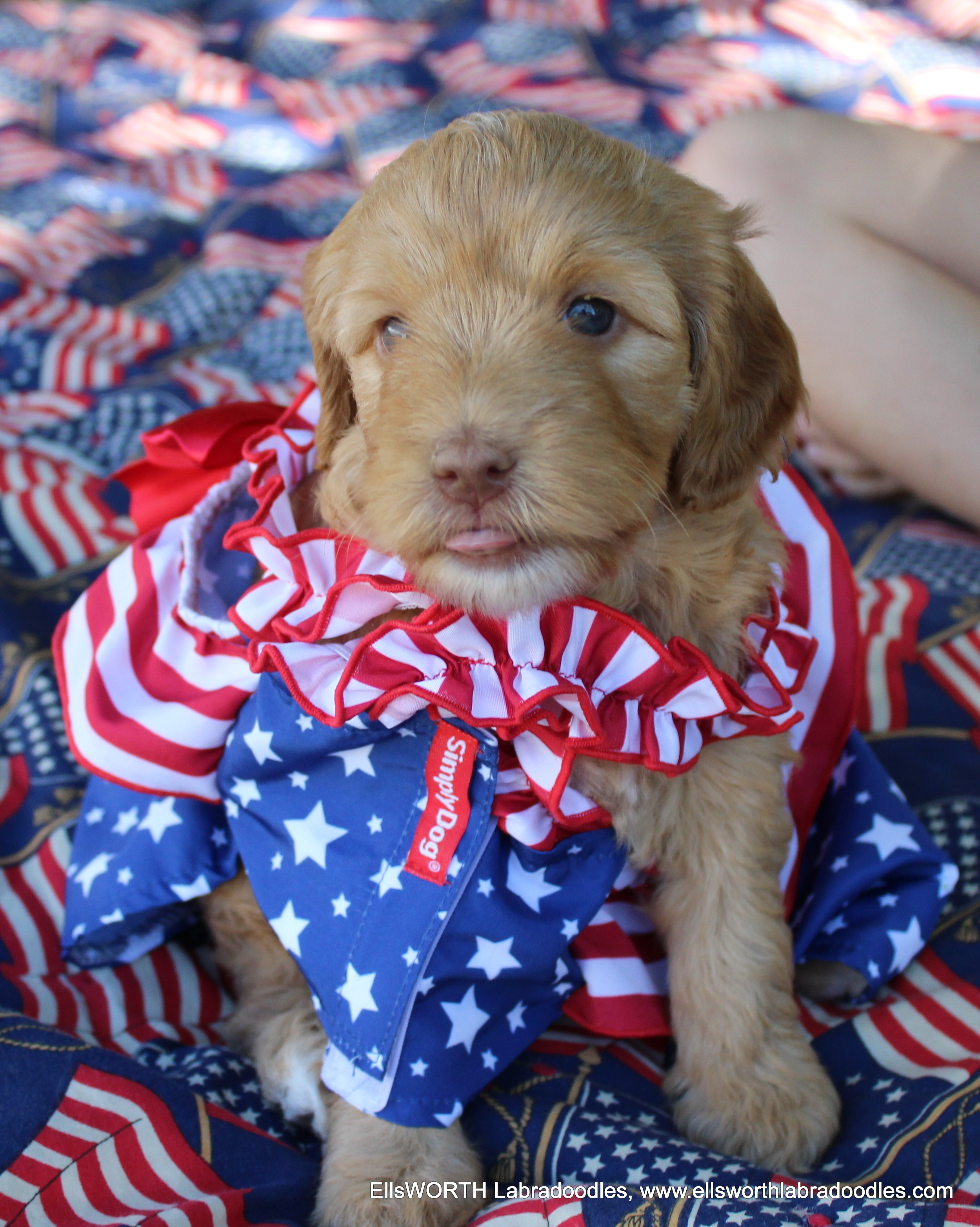Happy Flag day tongue out!