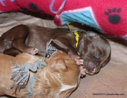 sleeping buddies,