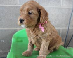5 weeks old weighs 3.14 lbs