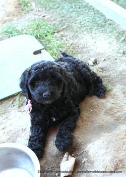 quiet, confident, a sweet puppy