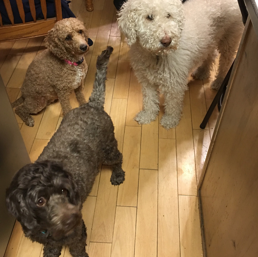 Ruby, Willow and Saddie