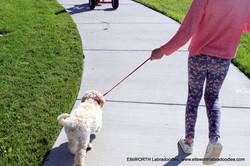 figuring out how to walk on a leash