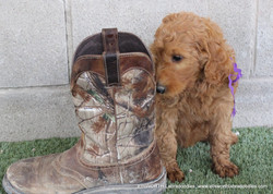 checking out me son's work boot