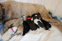 They are all nursing great