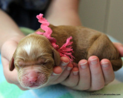 4th puppy born at 4:55 AM