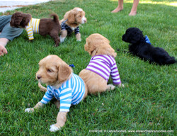 """""""look at us in these crazy shirts! """""""