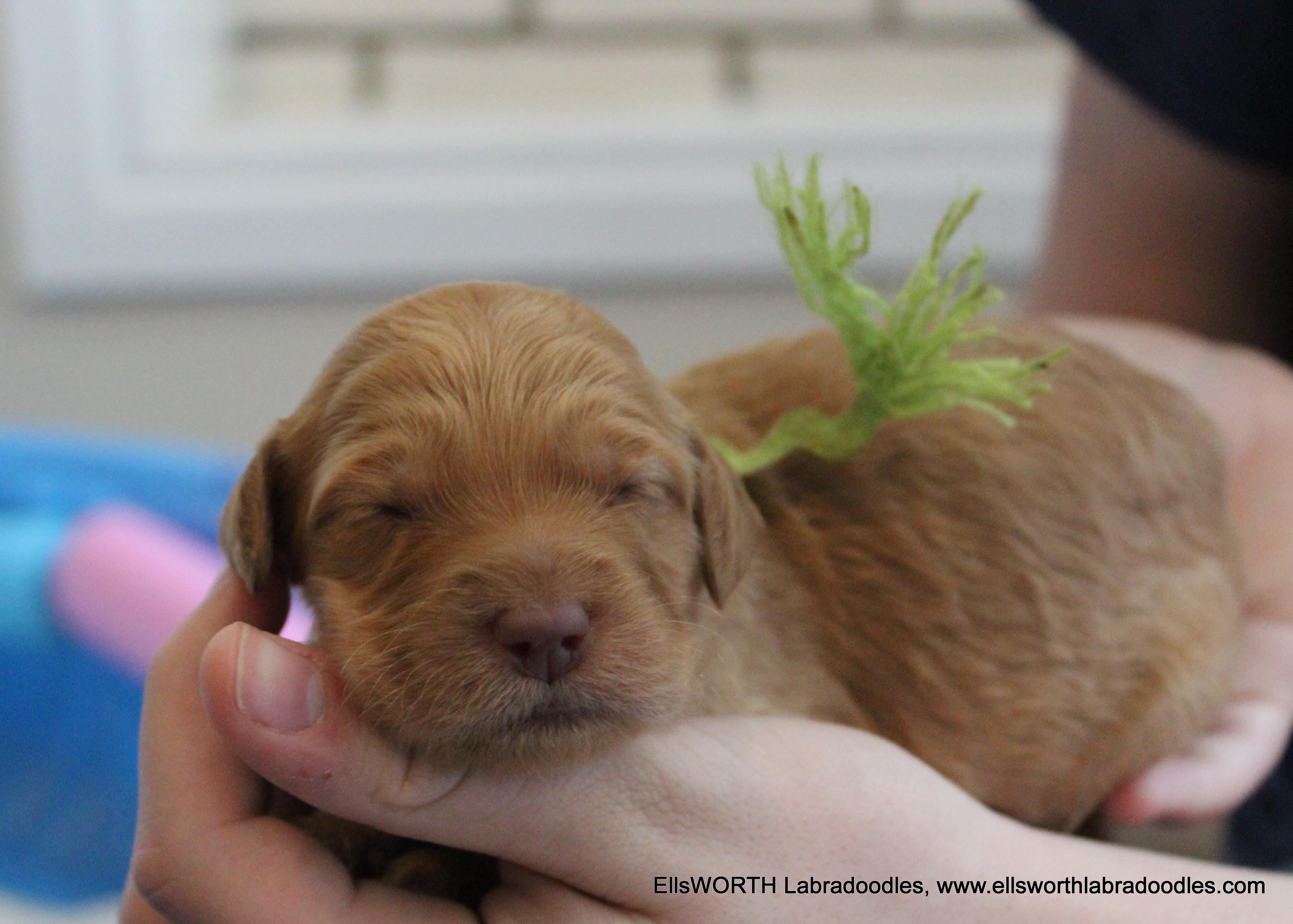 Winnie is just a little smaller