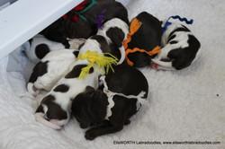 Happy Birthday to Gabby' s pups