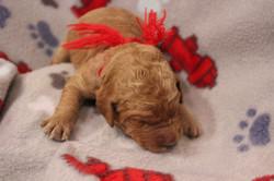 Puppies were one week old