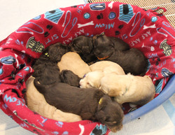 They love sleeping in a pile
