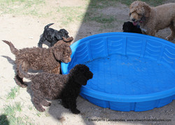 watching the pool fill up