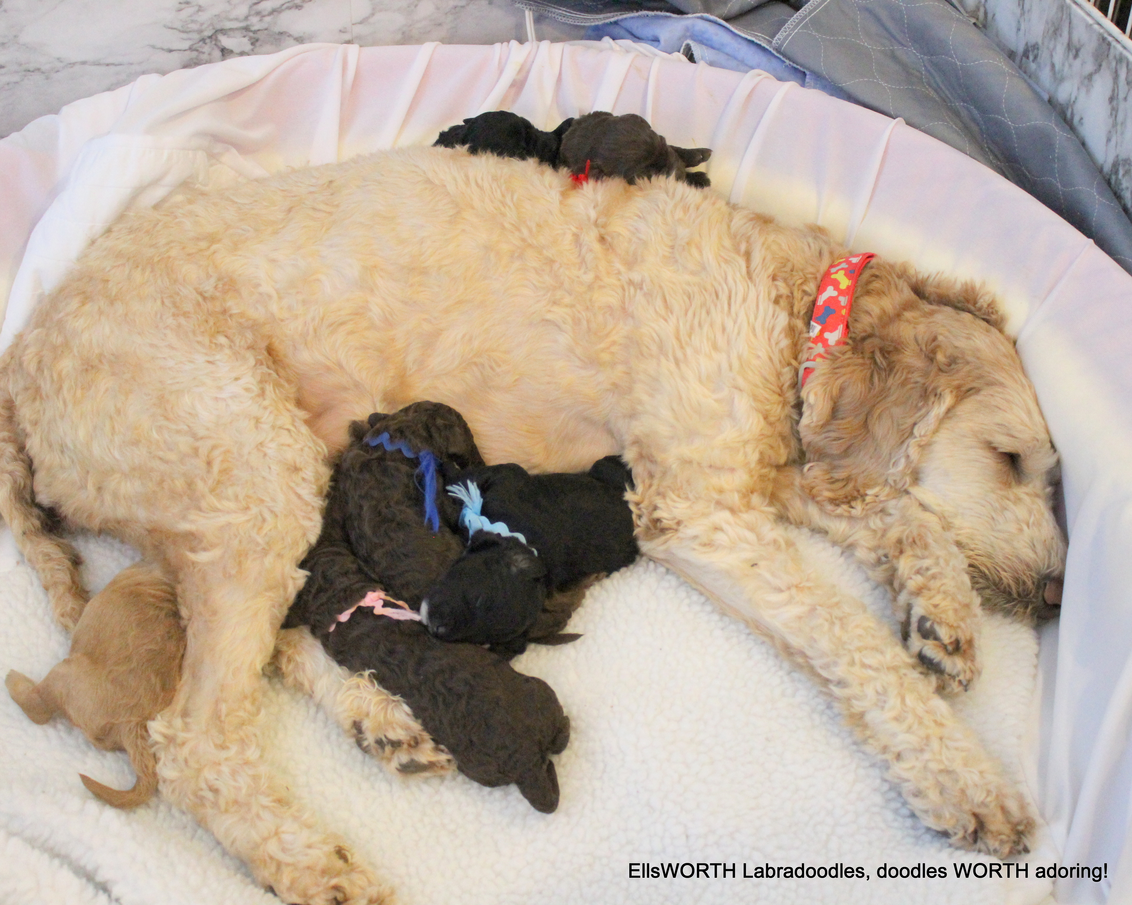 puppies are growing,