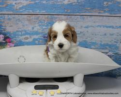 4 weeks old weighs 2.12 lbs