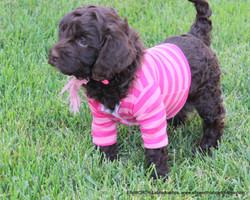 5 weeks old weighs 4.11