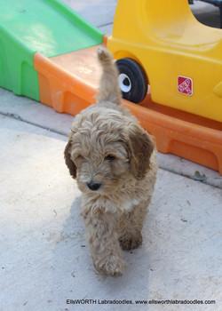 such a all around great puppy