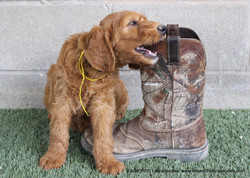 hey don't eat the boot