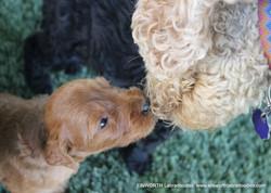 Winnie and Holly so cute!