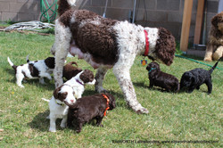 Here she is: Gabby and her pups