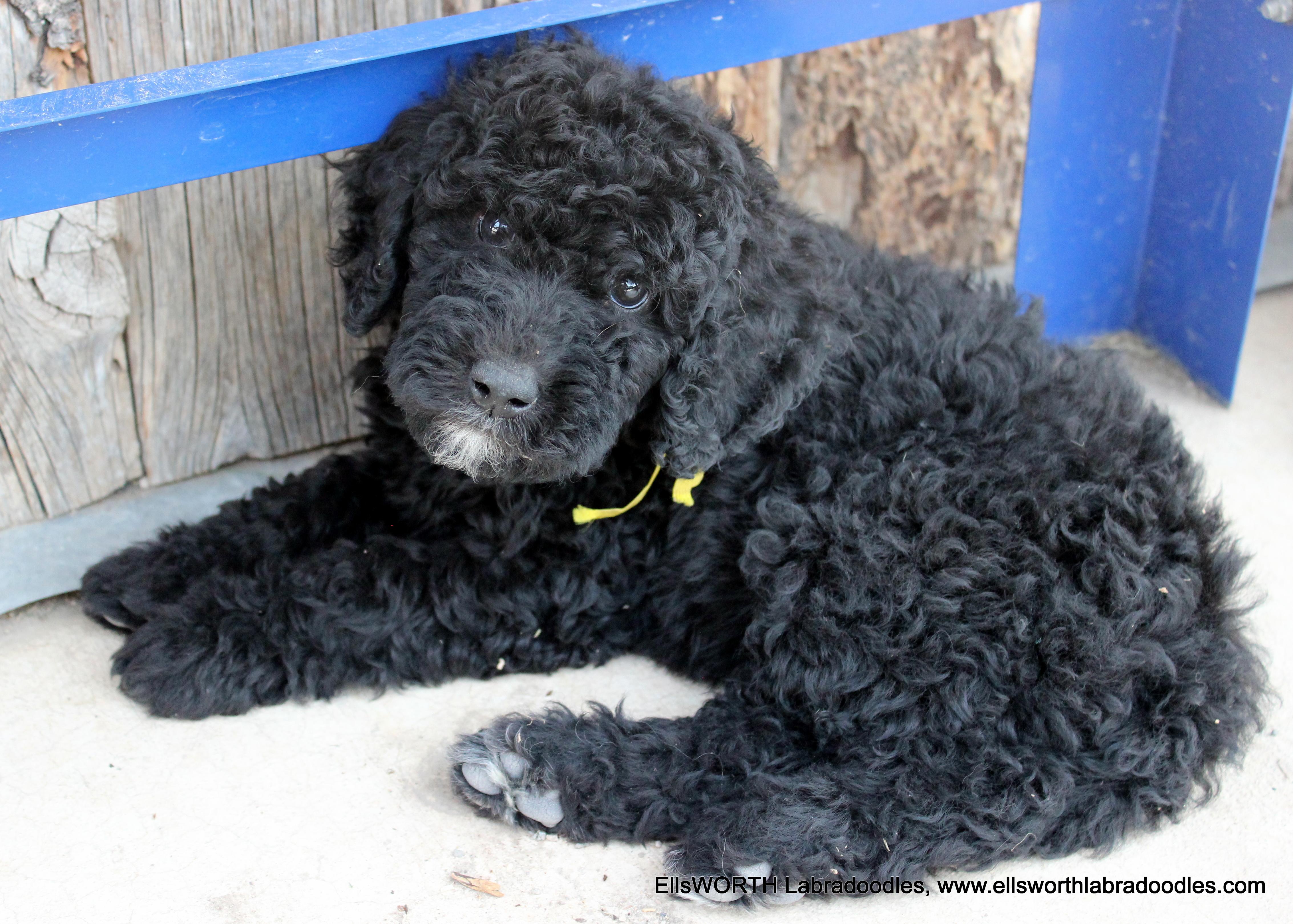 8 weeks old weighs 6.10 lbs,