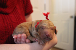 1st puppy born at 9:34 AM