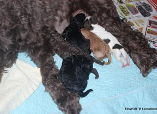 So So Many puppies!